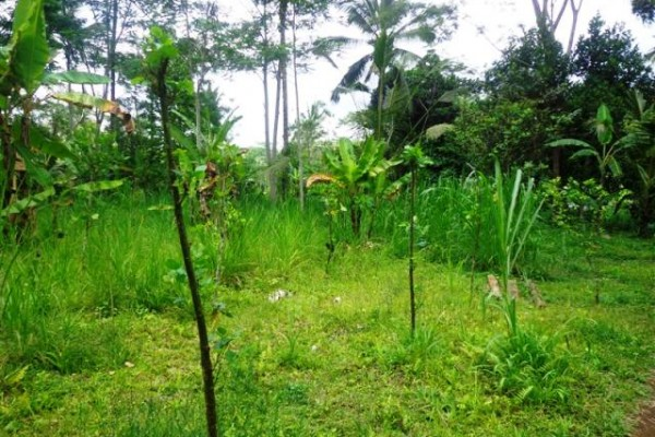 Jual tanah di Ubud Tegalalang cocok untuk villa – TJUB126