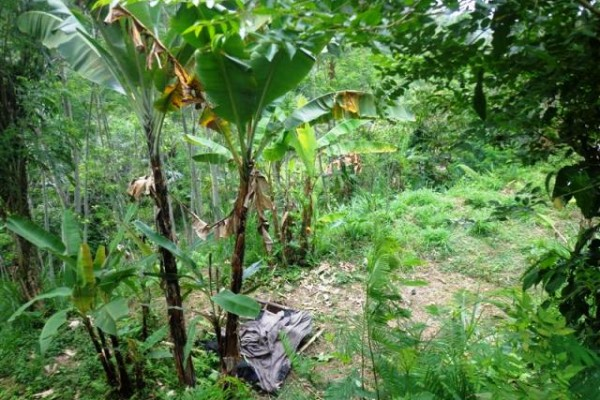 Jual tanah di Ubud dekat hotel Bagus Jati Tegalalang – TJUB127