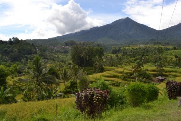 Jual tanah murah di Jatiluwih Tabanan –  Tanah tanah dijual di Jatiluwih Tabanan Bali