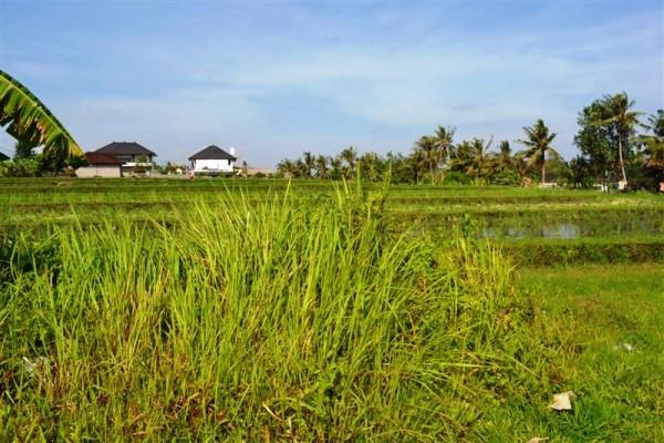 Tanah dijual di Canggu View sawah – TJCG072