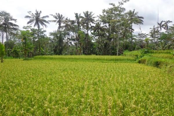 Tanah dijual di Ubud Tegalalang Bali – TJUB140