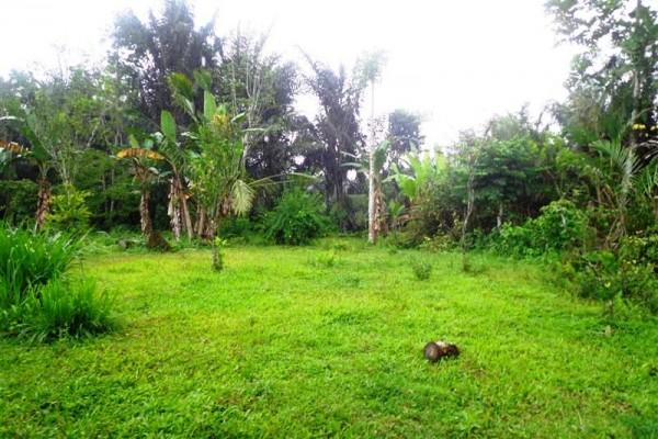Tanah dijual di Ubud Dekat bagus jati Hotel – TJUB136