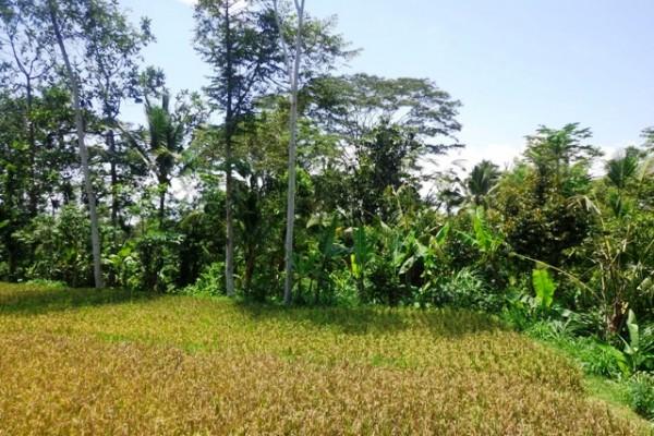 Tanah dijual di Ubud Bali dekat Sentral Ubud  – TJUB138