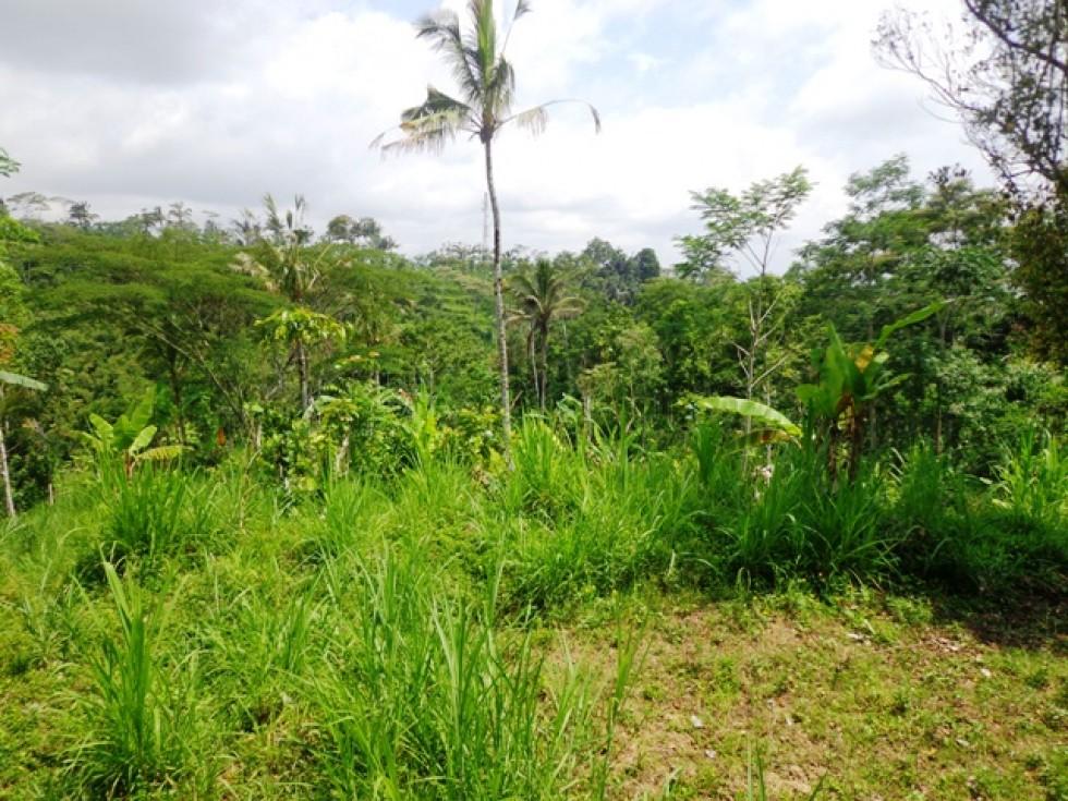 Tanah dijual di Ubud Bali view cantik harga menarik – TJUB133