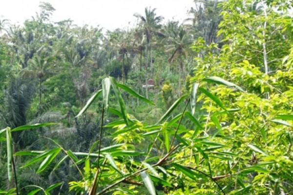 Tanah dijual di Ubud dengan view cantik – TJUB134