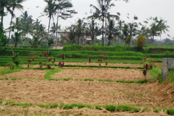 Jual Tanah 22 are di junjungan tegalalang Ubud TJUB142
