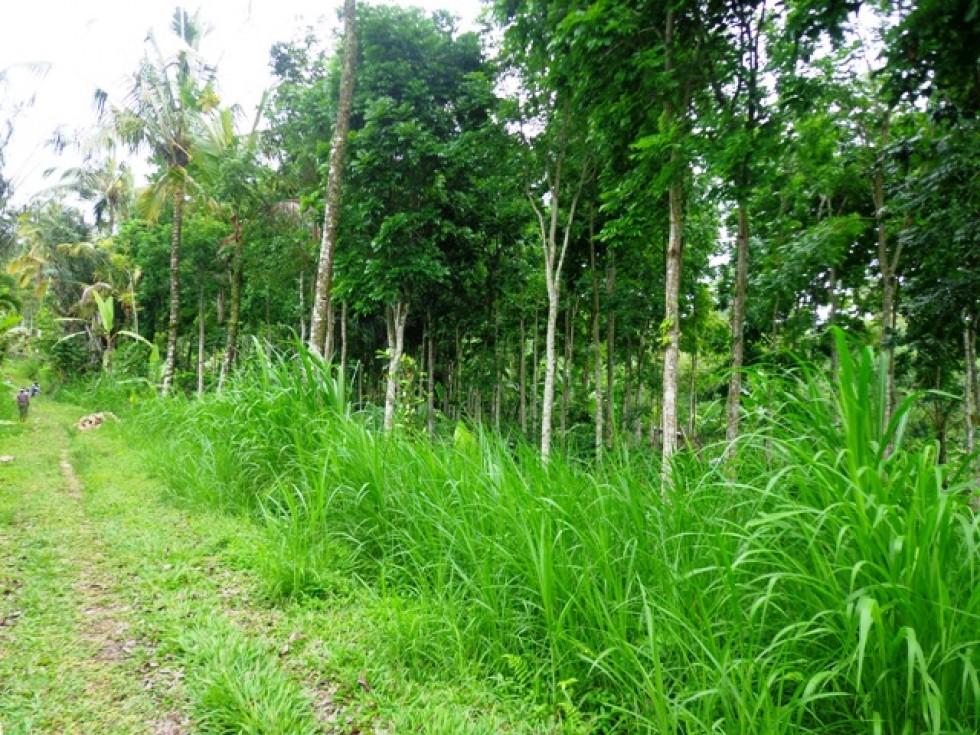 Tanah dijual di Ubud dengan pemandangan lusr biasa indah – TJUB146