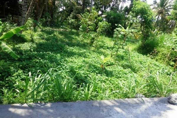 Tanah dijual di Ubud view sawah dan hutan – TJUB139