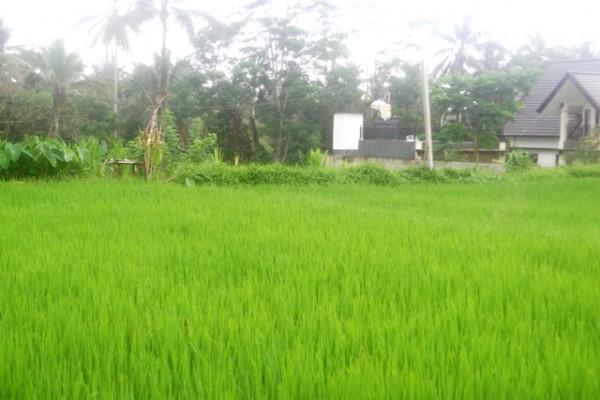 Tanah dijual di Ubud cocok untuk villa dengan view sawah – TJUB148