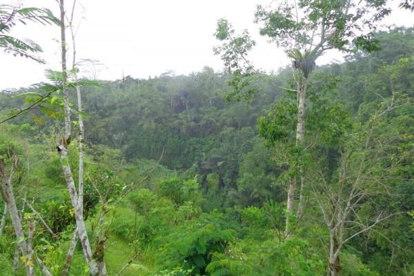 Tanah dijual di taro Ubud Bali view Sungai Dan Hutan – TJUB158