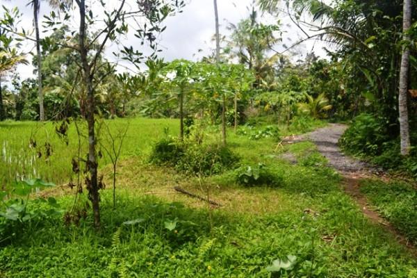 Tanah dijual di Ubud, view tebing T1049