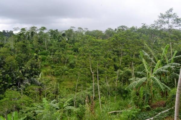 Tanah dijual di Ubud, view sungai dan tebing T1050