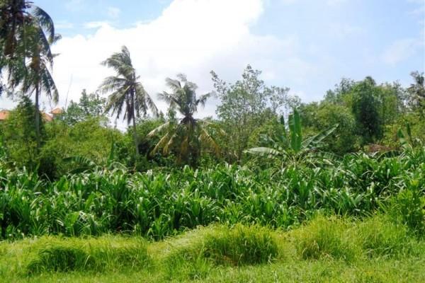 Dijual tanah di Canggu 24 are , view kebun dan sungai TJCG089