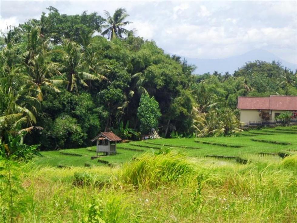 Dijual tanah di Canggu Bali,view sawah ( TJCG090 )