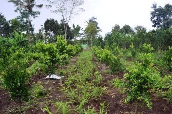 Tanah dijual di Ubud view cantik di pinggir jalan – TJUB159