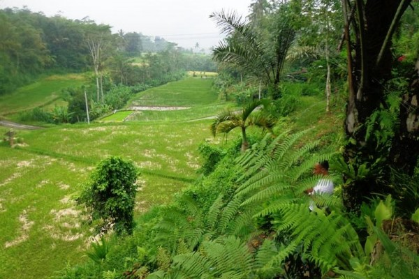 Tanah dijual murah di Ubud Bali ,view sawah (TJUB162)