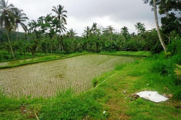 Dijual tanah murah di payangan Ubud Bali, view sungai,tebing,sawah – TJUB164