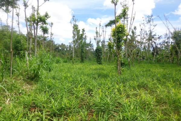 Dijual Tanah di Ubud Bali, view hutan, sungai dan kebun  ( TJUB167 )