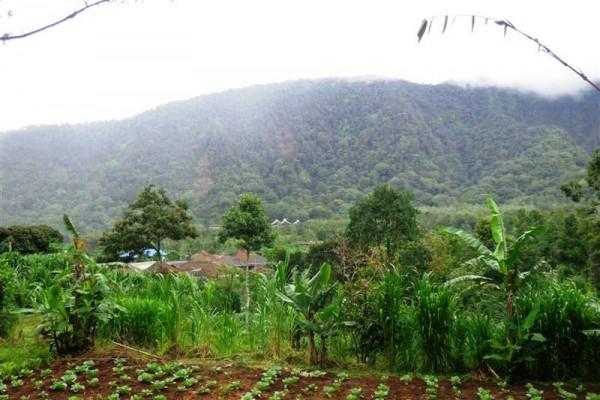Tanah dijual di Bedugul Tabanan Bali 7,85 are view Gunung TJBE028