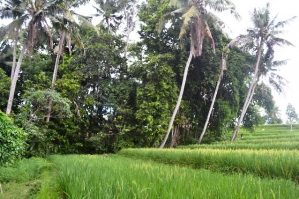 Tanah dijual di Canggu untuk mewujudkan rumah impian anda – TJCG082