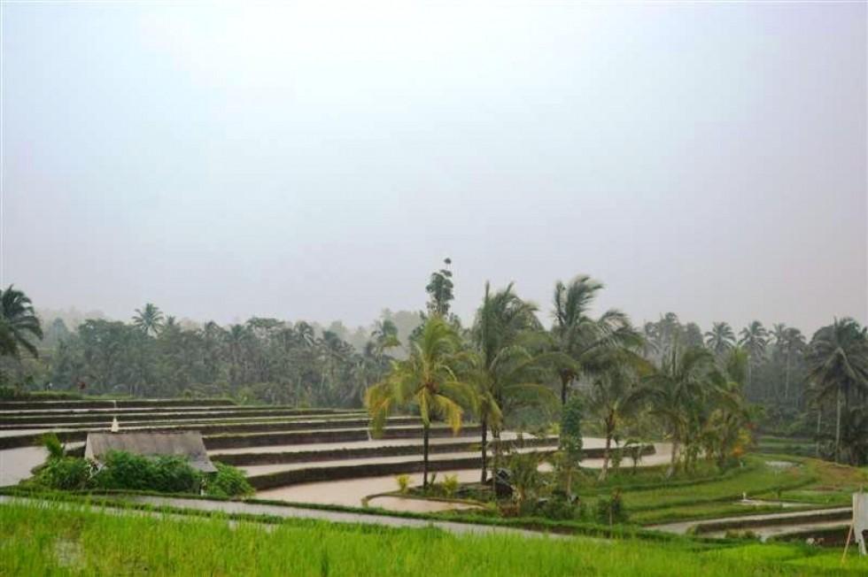 Tanah dijual di Tabanan Bali view hutan dan sawah – TJTB021