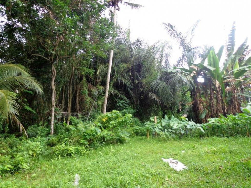 Jual tanah di Ubud lotunduh view cantik – TJUB105