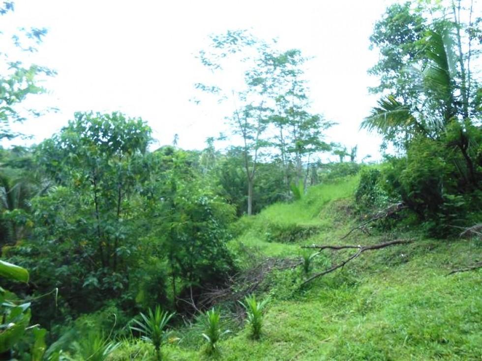 Tanah dijual di Tabanan Bali view alami di pinggir jalan – TJTB032