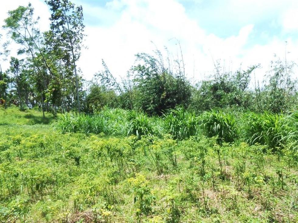 Tanah dijual di Ubud Bali view Gunung Batukaru – TJTB034