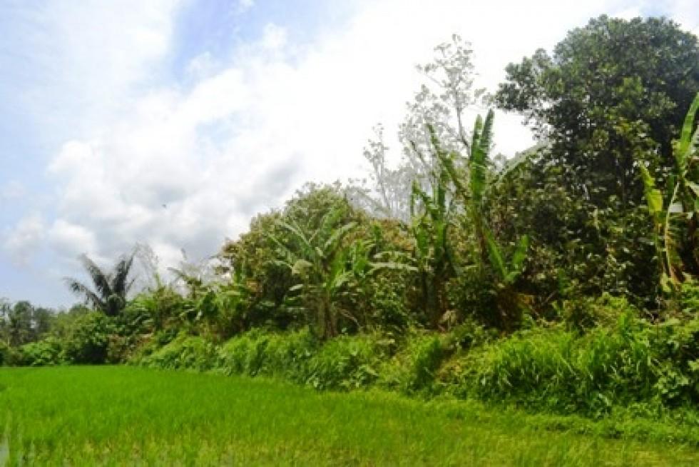 Tanah dijual di Tabanan Bali view Sawah di Jatuluwih – TJTB028