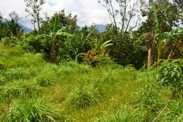 Tanah dijual di Tabanan Bali view sawah  – TJTB030