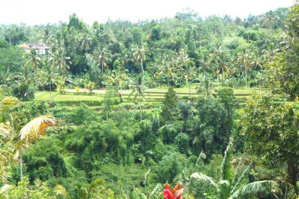Tanah dijual di Tabanan Bali Dekat Bedugul view Gunung – TJTB037