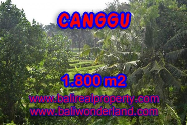 Tanah dijual di Canggu Bali view sawah,sungai di canggu brawa