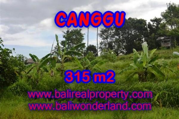 Tanah di Canggu dijual view sawah,sungai 3.15 Are di canggu brawa  Bali