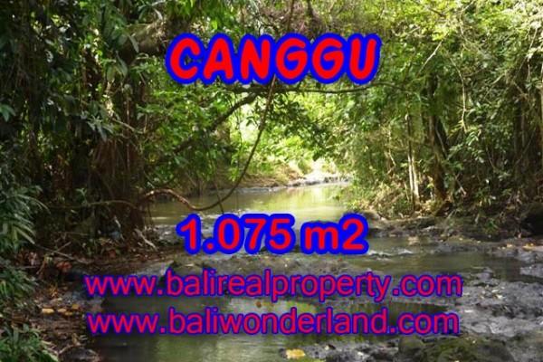 Jual tanah di Canggu Bali View sawah –  TJCG113