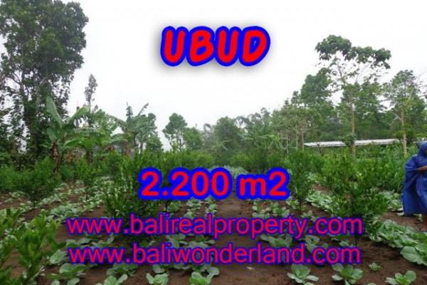 Tanah di Bali dijual View sawah di Ubud Tegalalang TJUB348