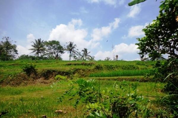 Jual tanah di Bali 2 Are View sawah dan hutan di Ubud Tegalalang
