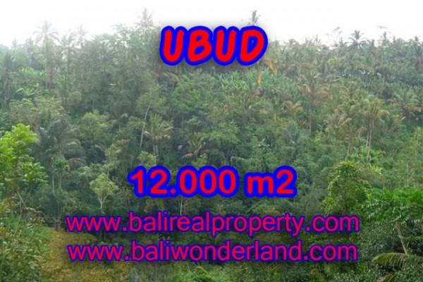 Tanah dijual di Ubud Bali view tebing dan sungai di Ubud Payangan