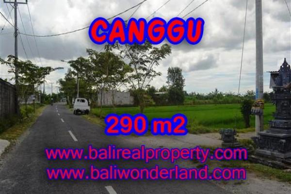 JUAL TANAH DI CANGGU BALI MURAH RP 3.950.000 / M2 – TJCG141