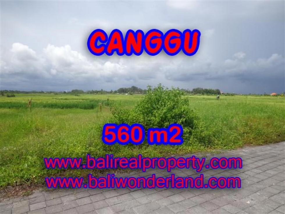 TANAH MURAH DI CANGGU TJCG138