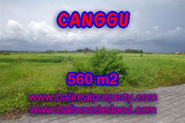 TANAH DIJUAL DI BALI, MURAH DI CANGGU RP 6.000.000 / M2 – TJCG138