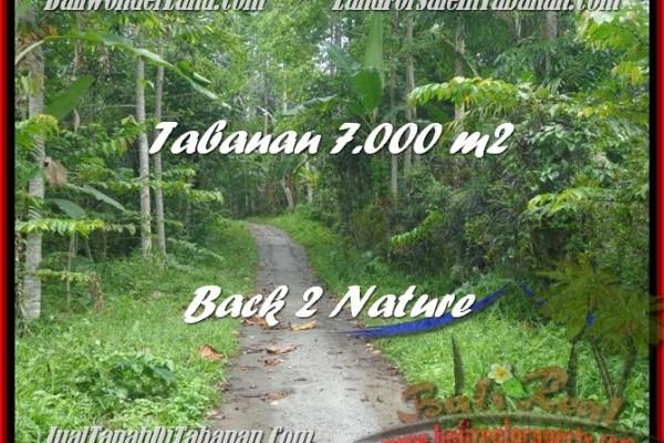 JUAL TANAH di TABANAN BALI 70 Are Gunung dan Kebun
