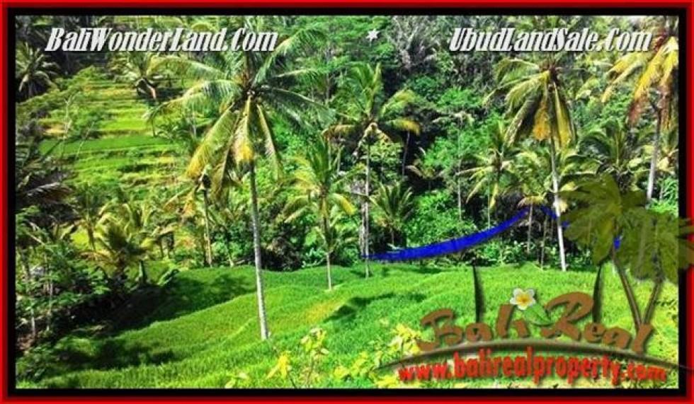JUAL TANAH di UBUD BALI 2,500 m2  View Tebing,sawah Link Villa