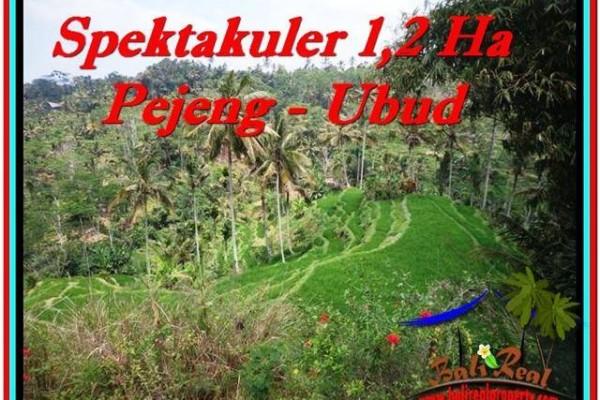 TANAH di UBUD BALI DIJUAL MURAH 120 Are di Ubud Tampak Siring