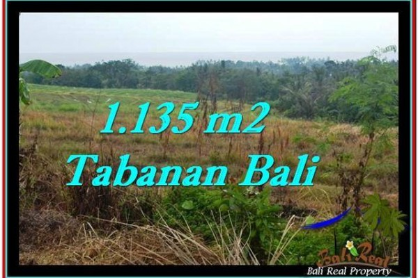 TANAH di TABANAN JUAL MURAH 11.35 Are View sawah, laut dan gunung