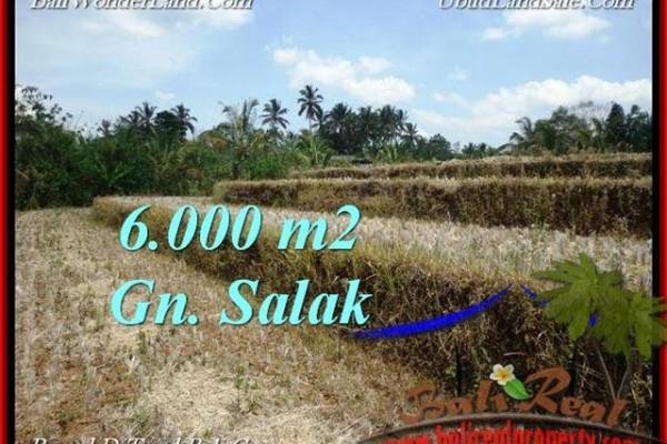 JUAL TANAH MURAH di TABANAN 6,000 m2  View Gunung, sawah