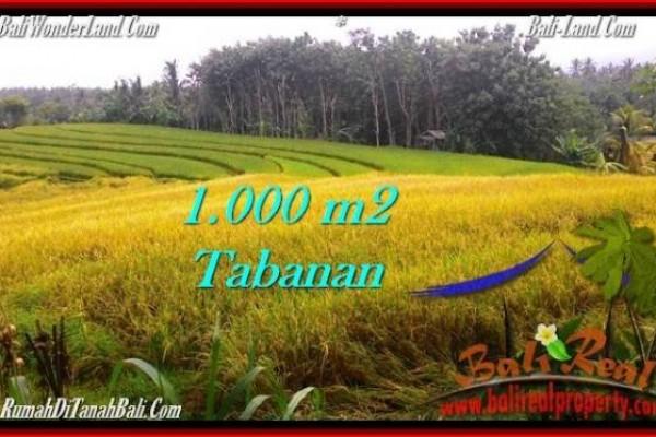 TANAH MURAH JUAL di TABANAN BALI 10 Are View sawah dan laut