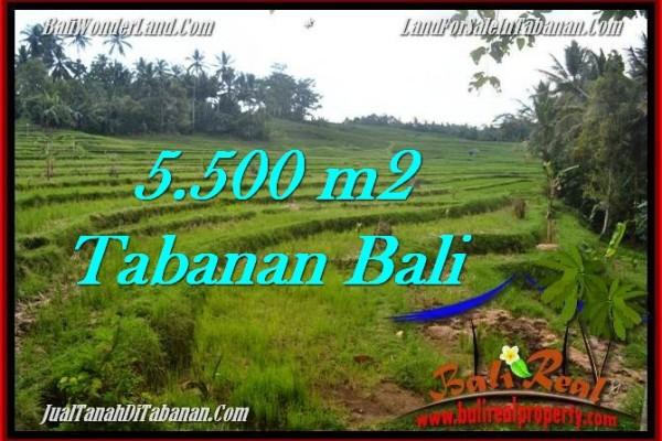 TANAH di TABANAN BALI DIJUAL MURAH 5,500 m2 di Tabanan Penebel