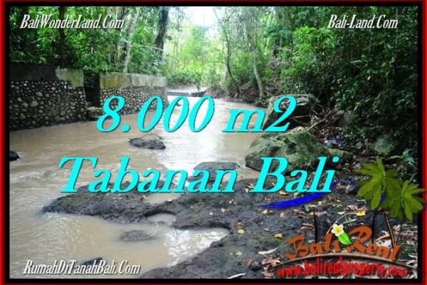 TANAH MURAH DIJUAL di TABANAN BALI 80 Are di Tabanan Selemadeg
