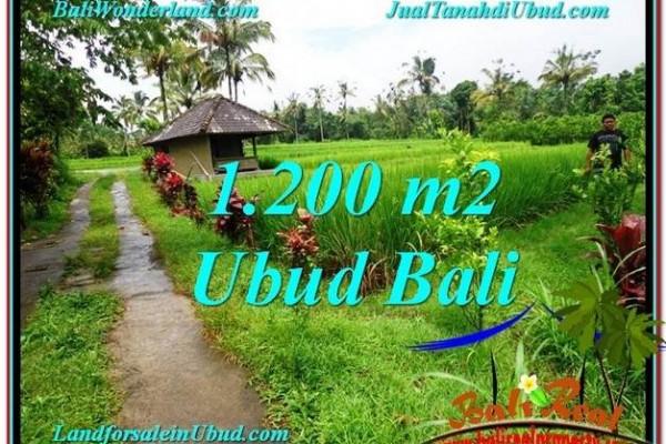TANAH di UBUD DIJUAL MURAH 12 Are di Ubud Payangan