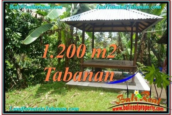 JUAL TANAH MURAH di TABANAN BALI Untuk INVESTASI TJTB294